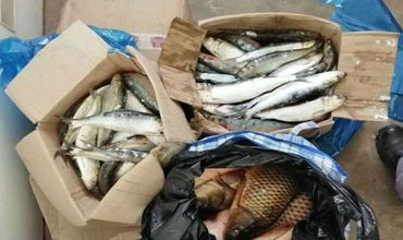 Рыба на общую сумму 2,470 румынских леев была конфискована. Ведется расследование.