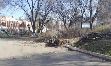 У ДК железнодорожников на Ботанике неизвестные пилят деревья