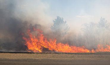 Всего в результате природных пожаров за сутки уничтожен 141 гектар полей.