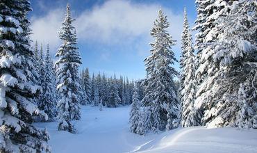Самая низкая температура будет отмечена в январе и феврале.