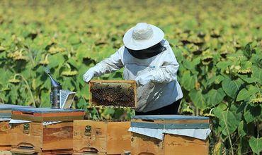 Пчеловоды, заводчики овец и коз в нашей стране хотят развивать свои возможности для начала бизнеса в этой области.
