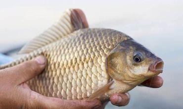 В Приднестровье рыбак предложил правоохранителям взятку карасями.