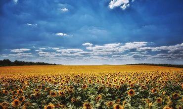 """В Молдове объявлен """"желтый"""" уровень метеоопасности в связи с жарой."""