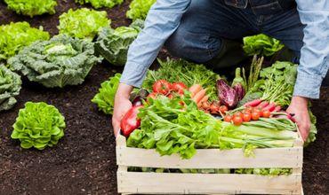 Гагаузские аграрии получат более 3,5 млн. леев субсидий