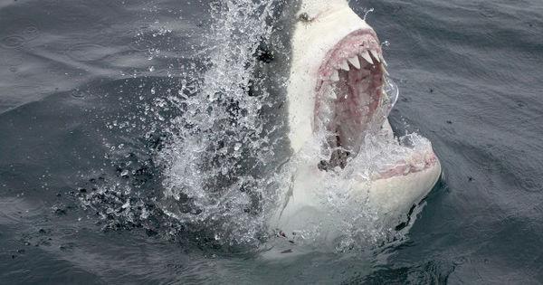 Bărbat, atacat de un rechin în zona Marii Bariere de Corali. Ce făcea thumbnail
