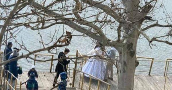 Nuntă pe timp de carantină: Mire și mireasă, filmați la Valea Trandafirilor thumbnail