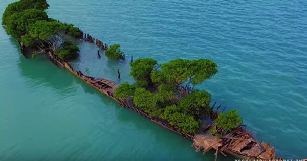 Заброшенный корабль превратился в остров thumbnail