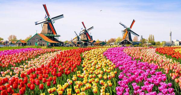 Нидерланды лишились 70% туристов thumbnail
