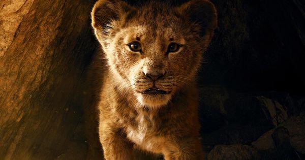 Disney снимет продолжение ремейка «Короля Льва» thumbnail