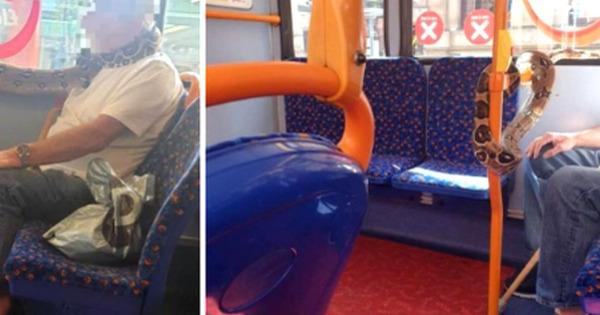 Un britanic s-a urcat în autobuz cu un șarpe viu pe post de mască de protecție thumbnail