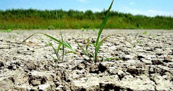 Usatîi: E necesar să fie instituită starea de urgență în agricultură thumbnail