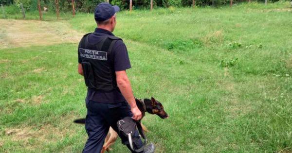 Служебная собака погранслужбы выследила ограбившего магазин мужчину thumbnail