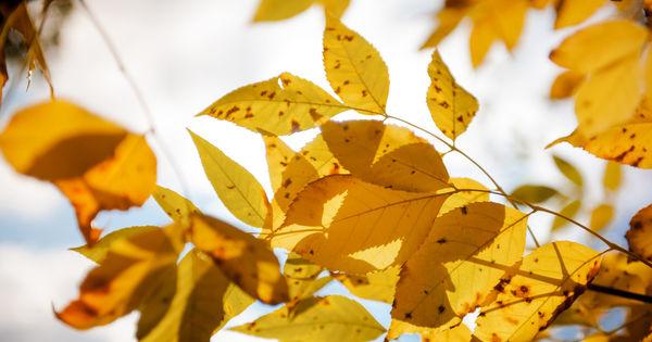 Meteo 20 octombrie: Cer variabil și maxime de până la +17°C thumbnail