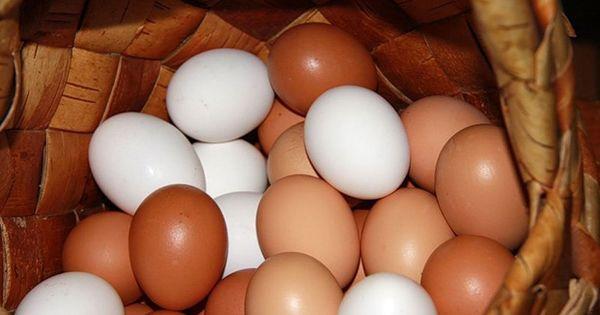 Ученые объяснили разницу между яйцами с белой и темной скорлупой thumbnail