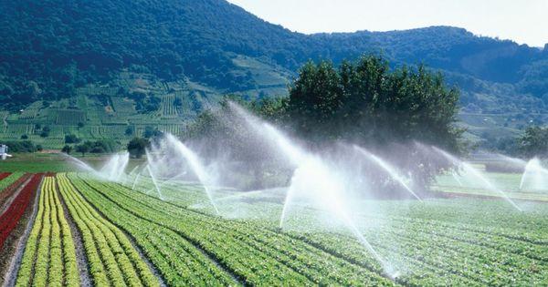 В Молдове из-за засухи масштаб ирригации в плодоводстве вырос в разы thumbnail