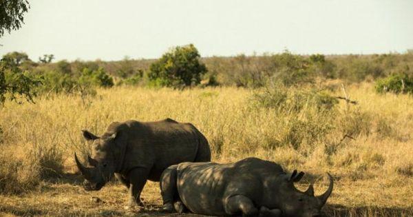 Pământul trece prin a șasea extincție în masă, iar oamenii sunt vinovați thumbnail