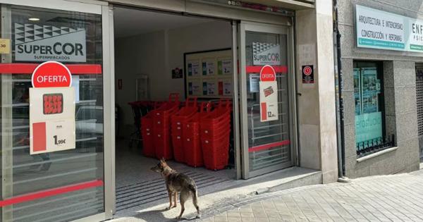 Испанец предлагал собак в аренду для прогулок во время карантина thumbnail