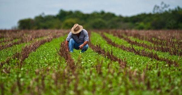 Compensaţii pentru agricultori: 250 fermieri vor primi 24 milioane lei thumbnail
