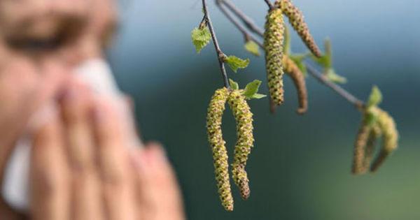 Учёные: Коронавирус уйдёт, когда появится пыльца thumbnail