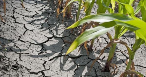 Situația din sectorul agricol: Autorităţile recunosc că e nevoie de intervenţia externă thumbnail