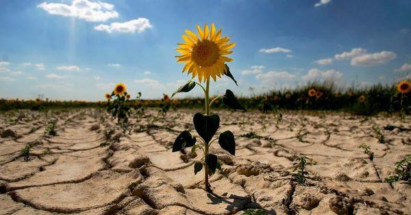 Фермер о засухе: Работаю 13-й год, но такого еще не доводилось видеть thumbnail