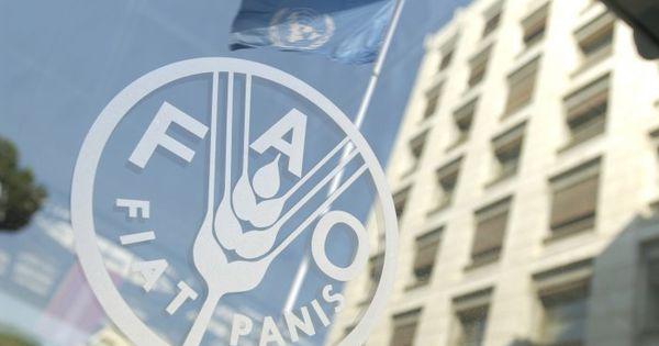 FAO va implementa în R. Moldova un proiect de adaptare la schimbările climatice thumbnail