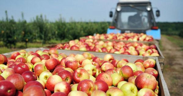 Exporturile Republicii Moldova în Federația Rusă au crescut thumbnail