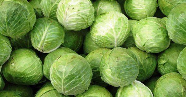 Спрос на капусту в Молдове снижается с каждым годом thumbnail