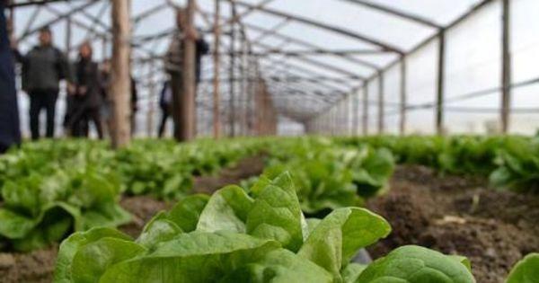 Producătorii agricoli au cerut sprijin de la Chicu pe timp de pandemie thumbnail