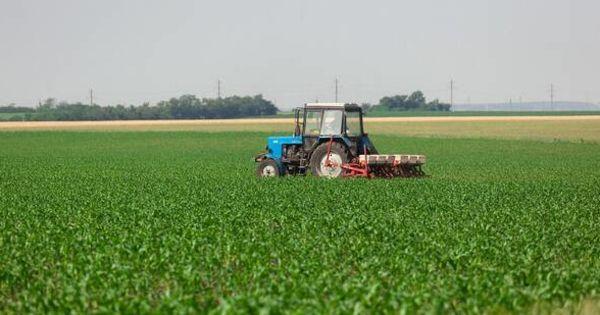 Из-за засухи в Слободзейском районе значительно пострадали посевы озимых культур thumbnail