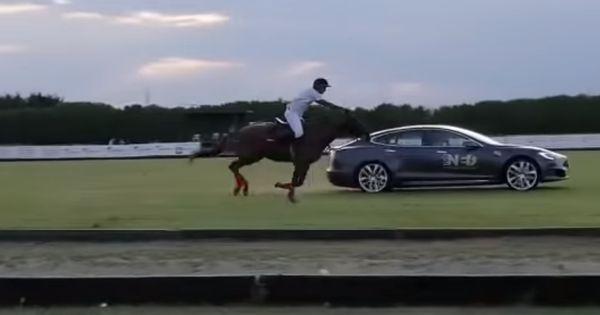 Tesla Model S устроила гонку с лошадью thumbnail