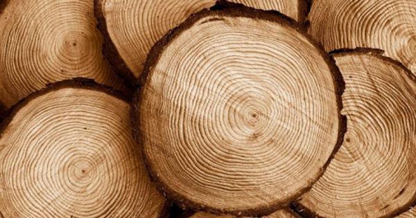 Древесные кольца подтвердили климатические изменения thumbnail