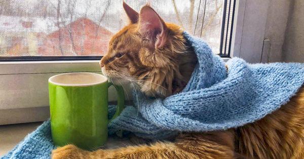 В Гонконге у кошки подтвердился коронавирус thumbnail
