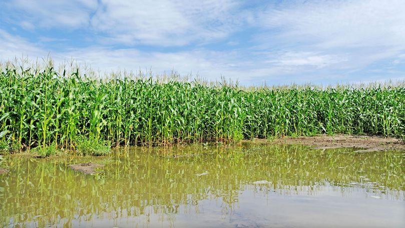 Ploaia face ravagii: Agricultorii din țară au înregistrat mari pierderi
