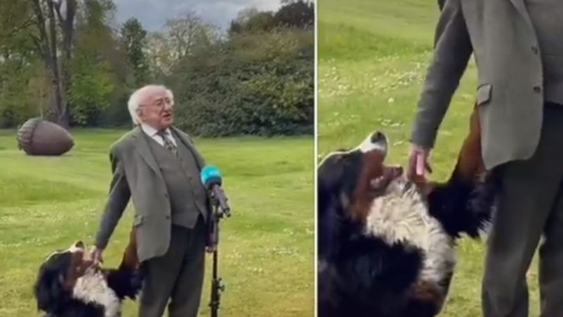 Imagini virale: Câinele președintelui Irlandei, filmat cum face show