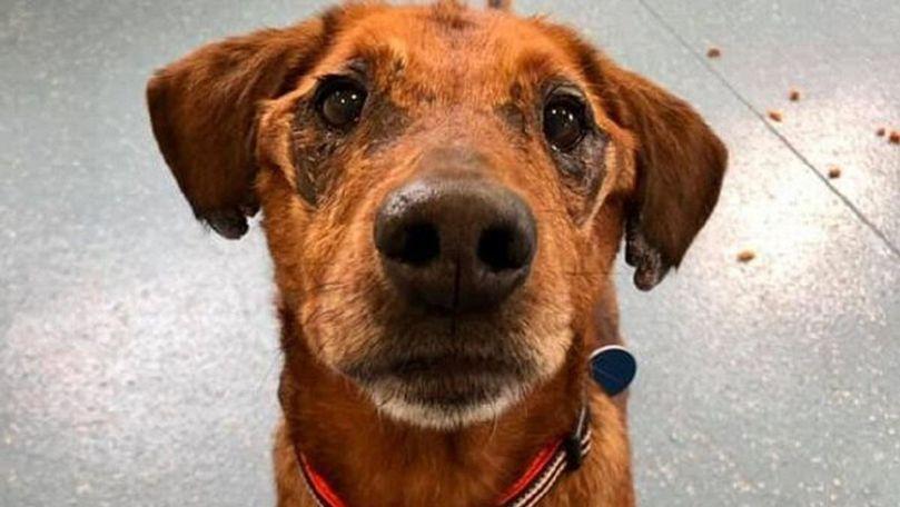 Povestea câinelui care riscă să moară singur, abandonat într-un adăpost