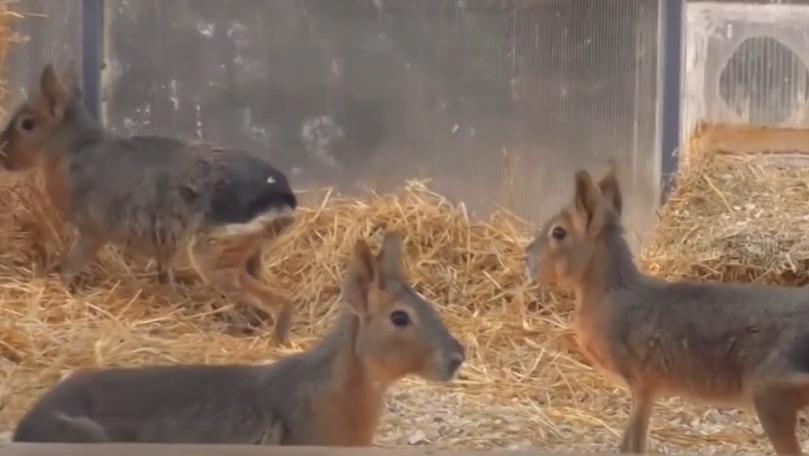 Familia animalelor de la Grădina Zoologică din Capitală s-a mărit