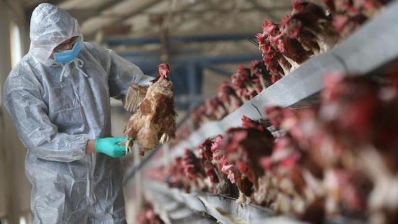 China anunţă primul caz din lume de infecție cu gripă aviară H10N3 la om