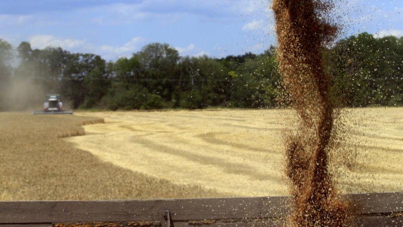 Rusia va deveni cel mai mare exportator de grâu din lume