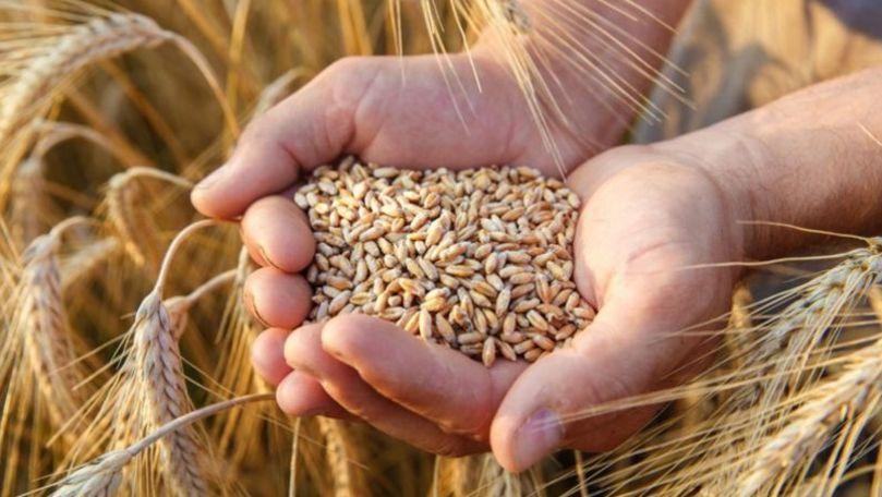 Ce arată expertiza celor 17.000 de tone de grâu din portul Giurgiulești
