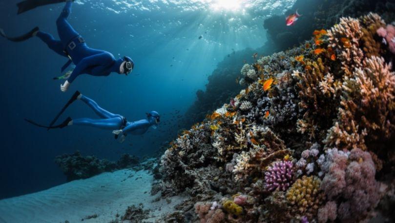 Animal capabil să își regenereze organele, descoperit în Marea Roșie