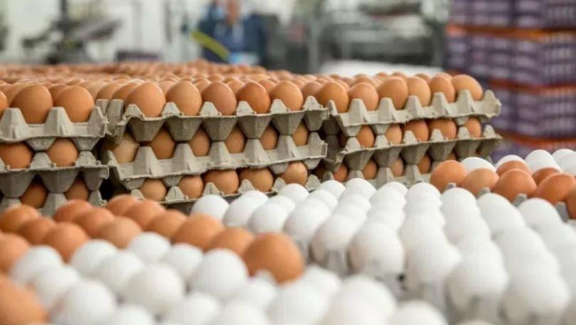 În Moldova a crescut consumul de ouă pe cap de locuitor. Media pe țară