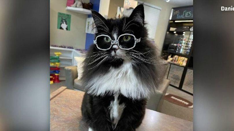O pisică cu ochelari din SUA ajută copiii să nu se simtă complexați