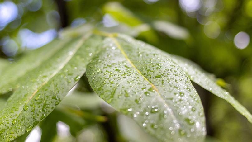 Meteo 25 august 2021: Vremea se răcește. Zonele unde va ploua