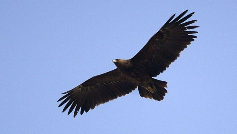 Patru păsări rare din Africa au trecut prin Moldova zburând spre Belarus