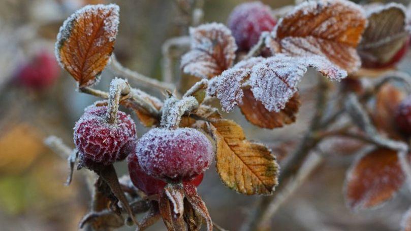 Primele înghețuri: Culturile agricole care ar putea fi afectate în țară