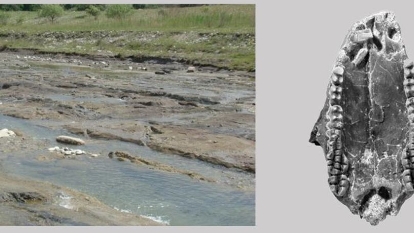 Mamifer care a trăit în urmă cu 70 de milioane de ani, găsit în România