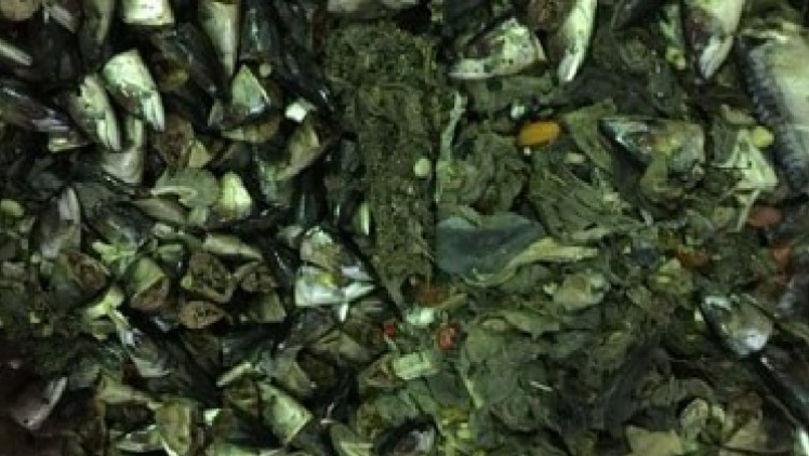 ACC anunță sursa putorii din Chișinău. Tone de resturi de pește, găsite