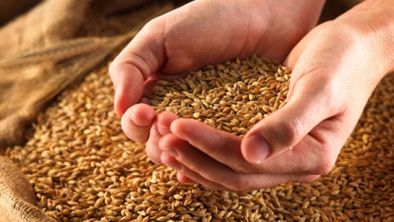 Recoltarea cerealierelor a început cu o întârziere de 10-14 zile