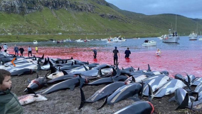 Val de furie după masacrul delfinilor în Feroe: Apele, înroșite de sânge